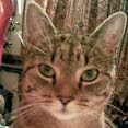 user Melanie McGlade apkdeer profile image