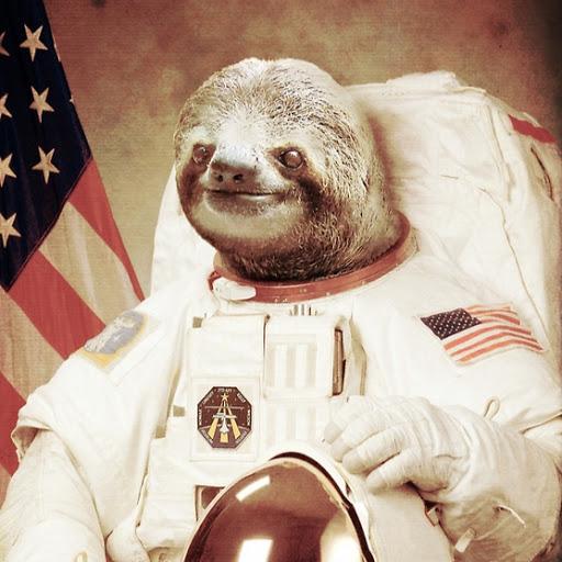sloth-341