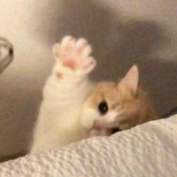 user Ezra Mae Gapuz apkdeer profile image