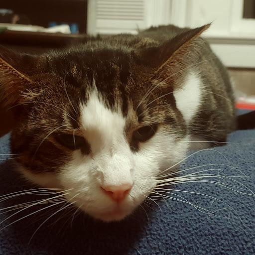 user tom brodigan apkdeer profile image