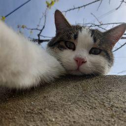 user Charbel Khoury apkdeer profile image