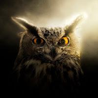 shprot1k avatar