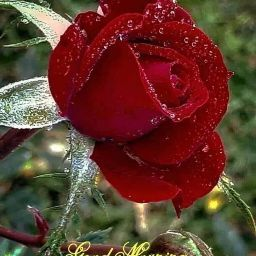 user Ishrat Jaleel Khan apkdeer profile image