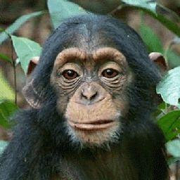 user Whistling Clean apkdeer profile image