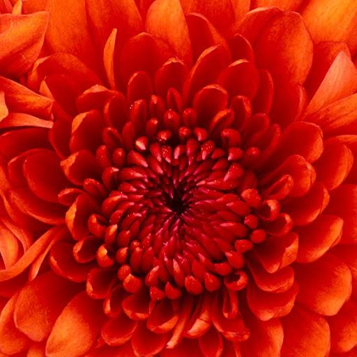 user humphrey moore apkdeer profile image