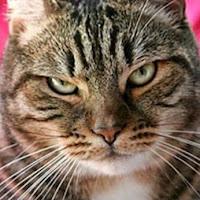 webaggressive avatar