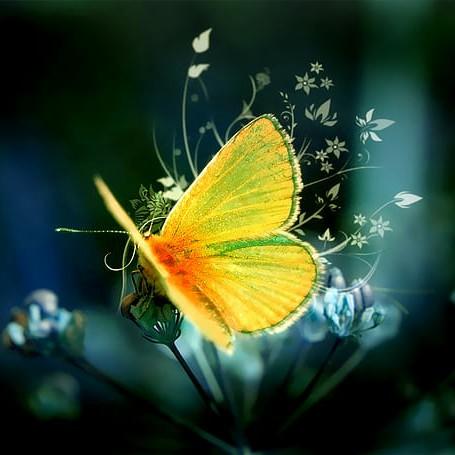 user um Omer apkdeer profile image
