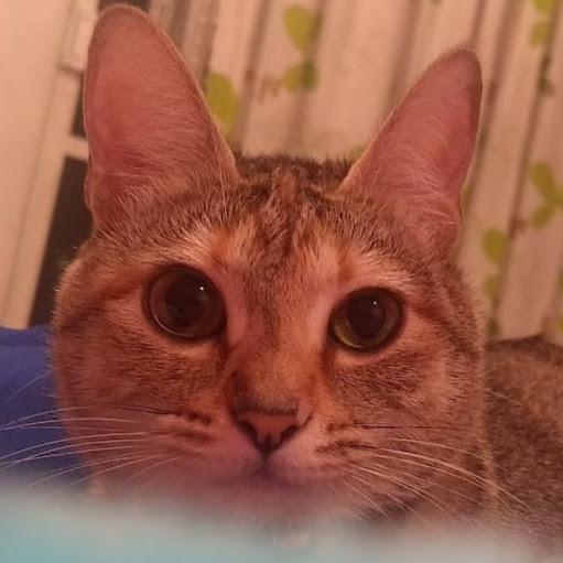Hi I'm Mausckat