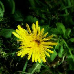 user Flower Powers apkdeer profile image