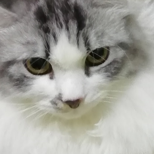 user black the umbreon apkdeer profile image