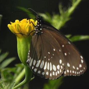 user Drswapan Kumar apkdeer profile image