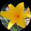 Stern Blume