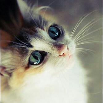 user xitshembiso kim apkdeer profile image
