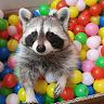 checker dayz avatar