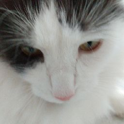 user Caligastia Infernus apkdeer profile image