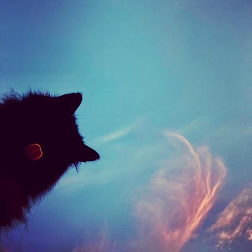 Fez Cat