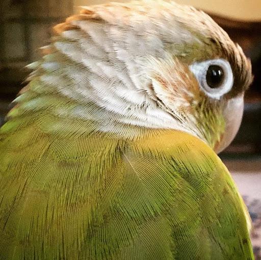 Merwa's avatar