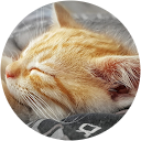 Immagine del profilo di maria rossi