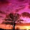 Dreams with Farhana Khan picture