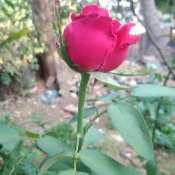user Kumar Kranti apkdeer profile image
