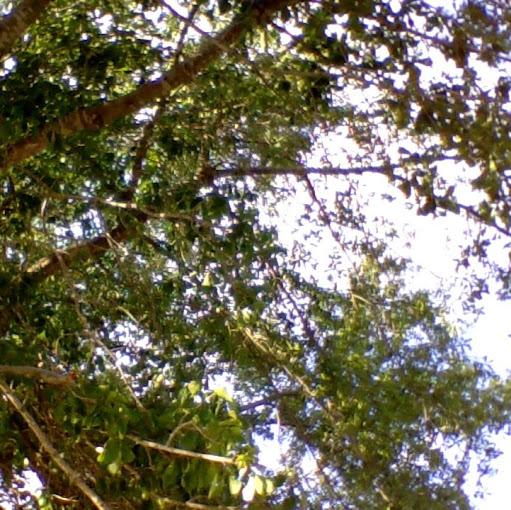 user Dyanne 37 apkdeer profile image