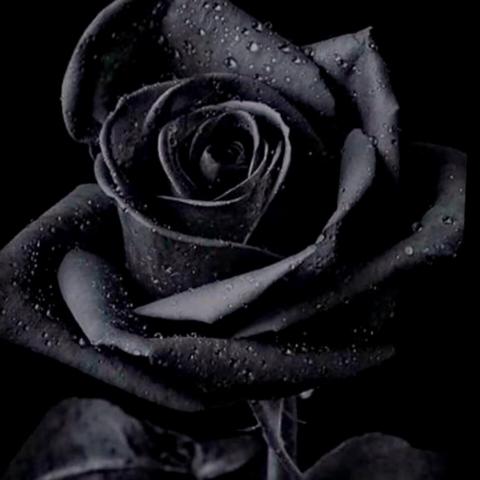 user pheonix x apkdeer profile image