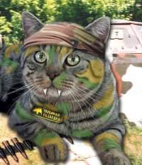Steel Cat