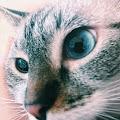 alejandra gonzalez's profile image