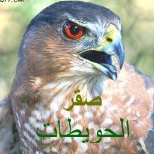 محمد الحويطي