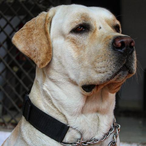 Gaurav Dubey's avatar