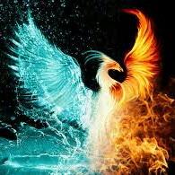 Noob Phoenix Pro
