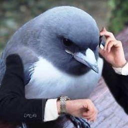 Wąśir Kiełbasy