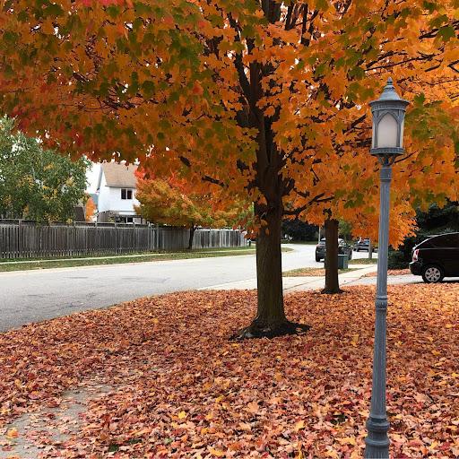Alex Kalhor