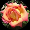 Image Google de anaïs bastide