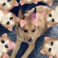Loquaciousness Loco's profile image