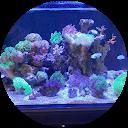 Juan's Reef