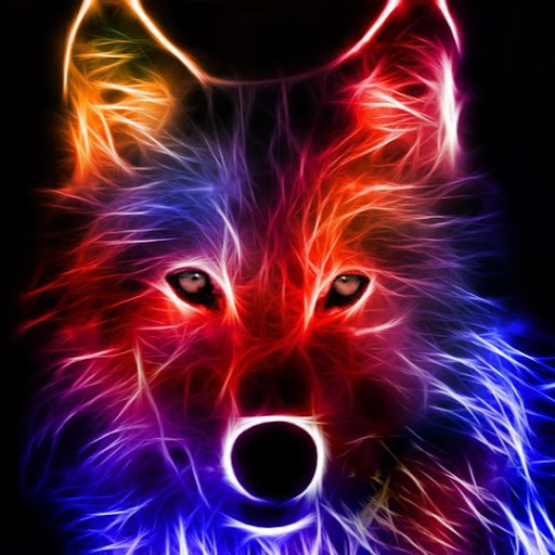 User image: זאב בודד