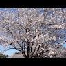fukudajzs160 さんのプロフィール写真