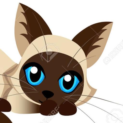 Kitten 2•0 MAGIC