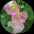 Polly Lee Google Profile Photo