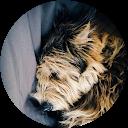 Image Google de sandrine bossé