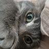 Chenoa Casburn's profile image