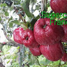 sundar fruits shop