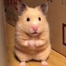 吃飯變倉鼠