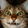 Katin Zauber