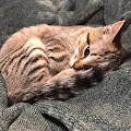 weirdoismehname kittens's profile image
