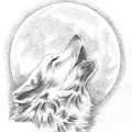 SheWolf 's profile image