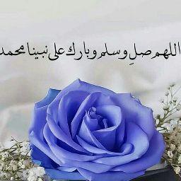 Amr Abou Zeid
