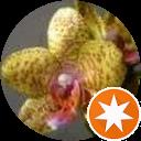 Milena Orchid