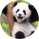 PandaLibre